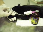 Small eutanazja ryc1 opt