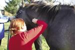 Small konie ryc1 opt