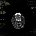 Small kryptokokoza ryc3 opt