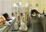 Small hemodializa ryc3 opt